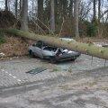 image sturm-cynthia-28-02-2010-jpg